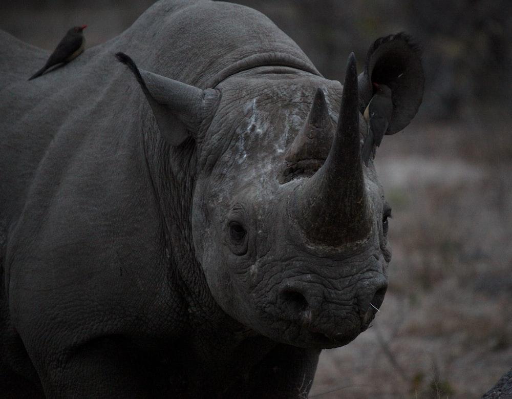 macro shot photography of rhino