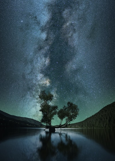 green leafed tree on body of water under starry sky