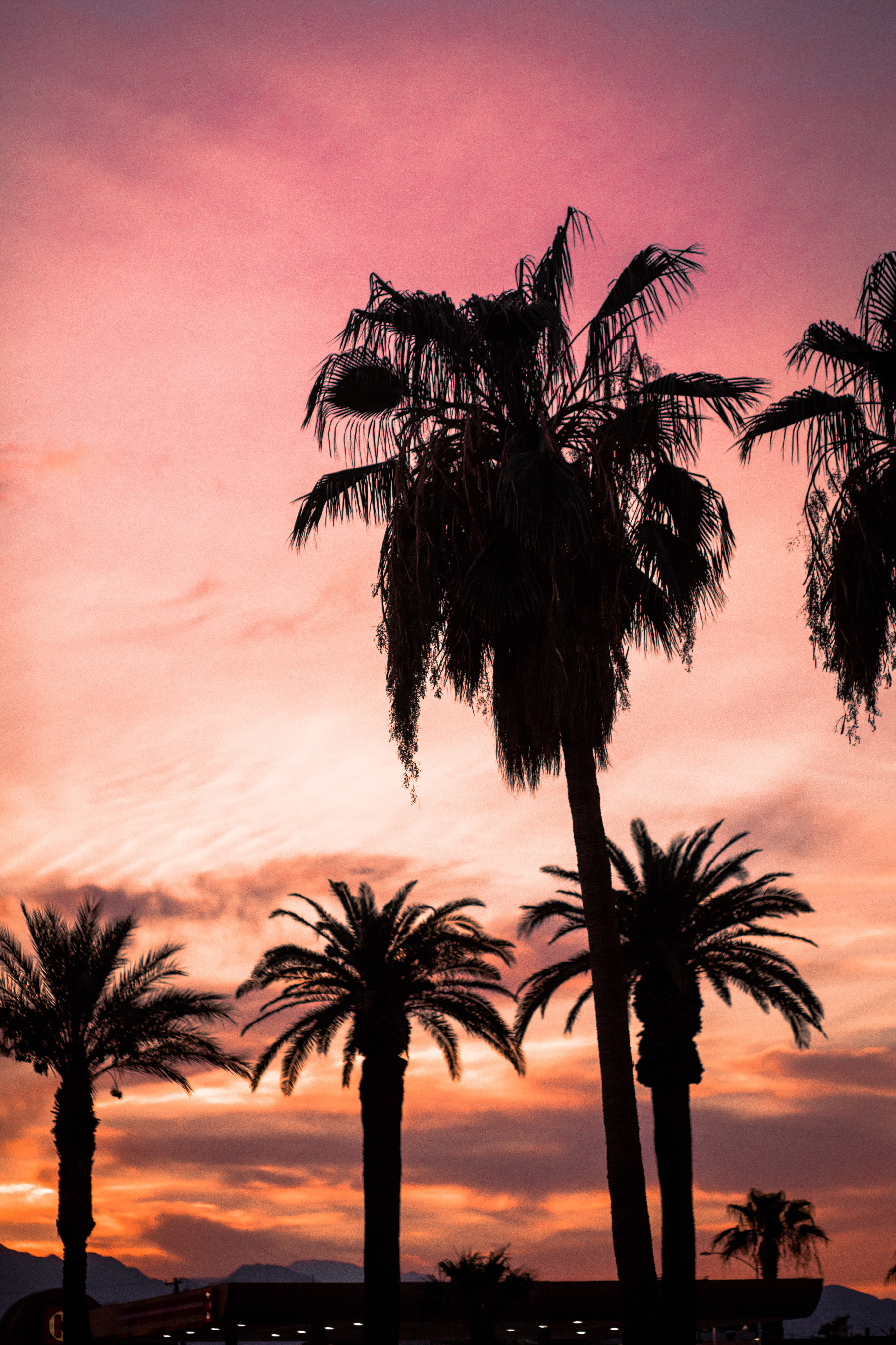 silhouette of palm trees during sunset