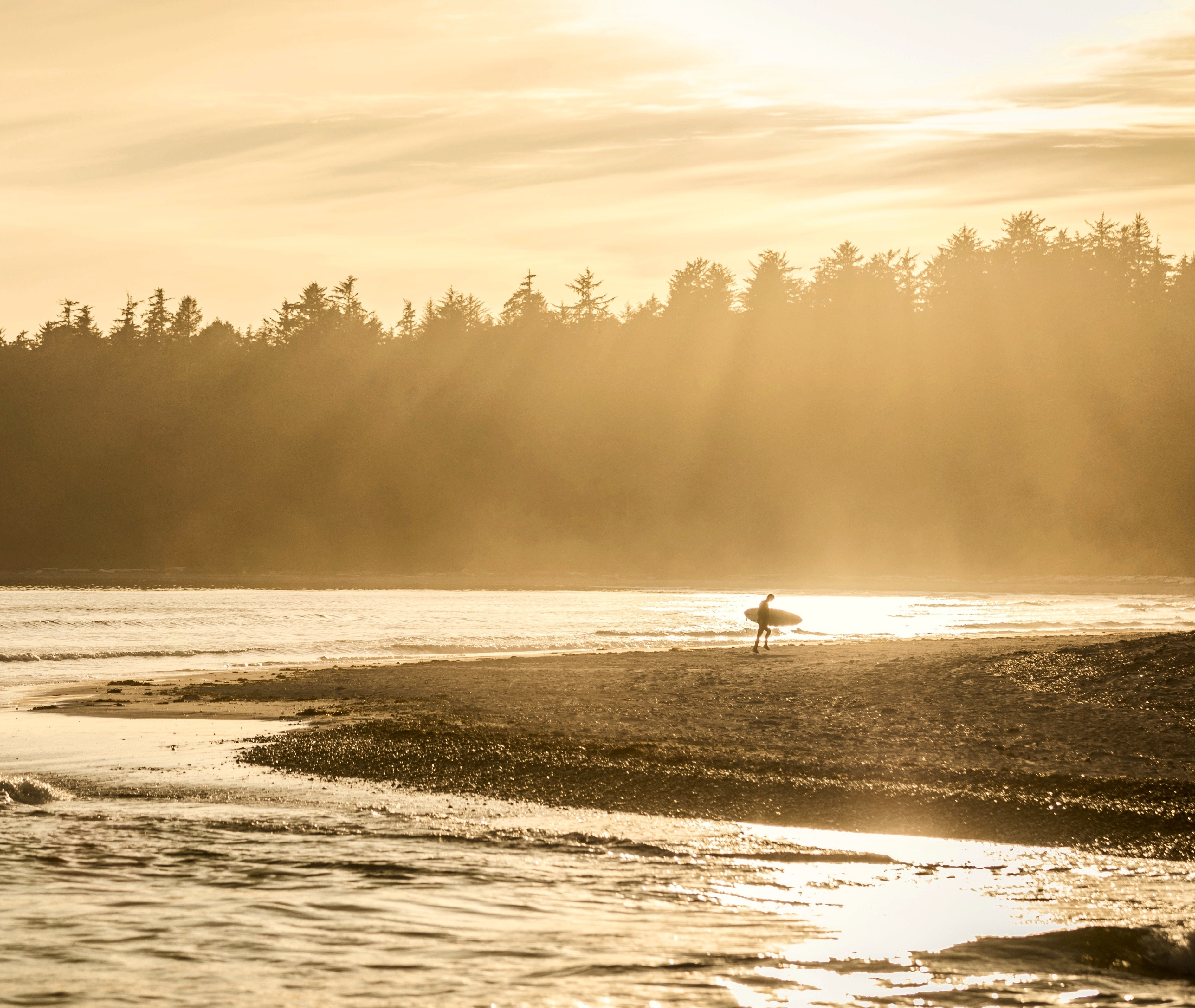 Surfer carrying surfboard walking on the beach by the forest at Promontory, Chilliwack, British Columbia, Canada