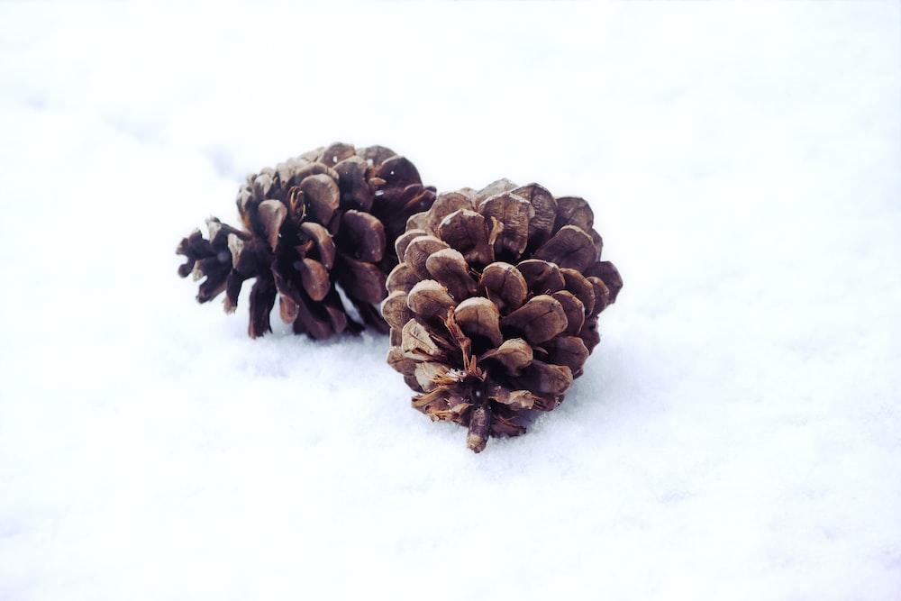 two pinecones
