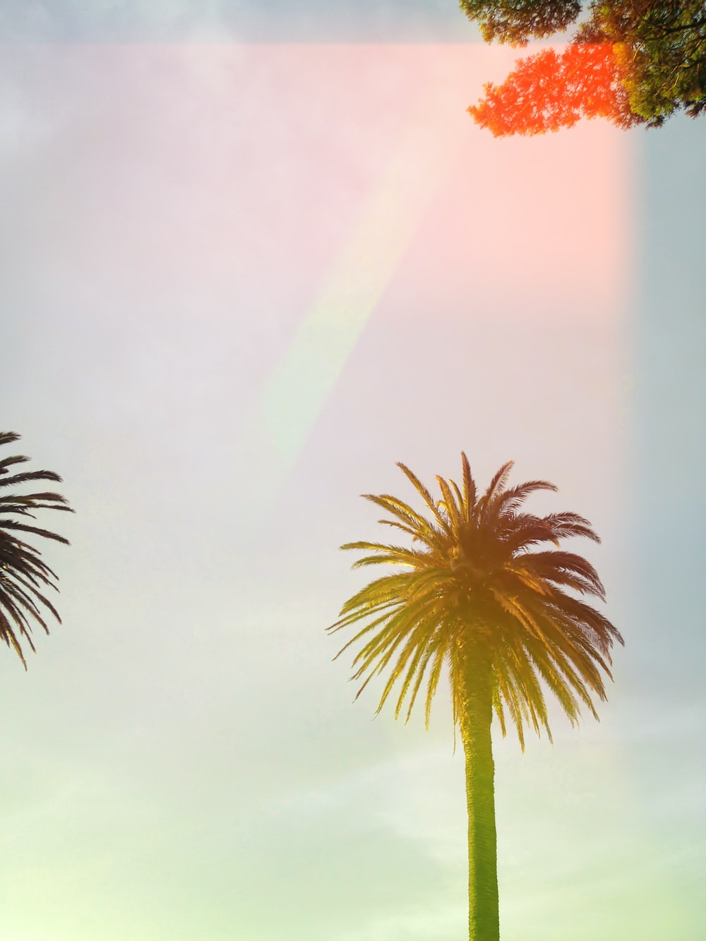 green palm tree under cloudy sky
