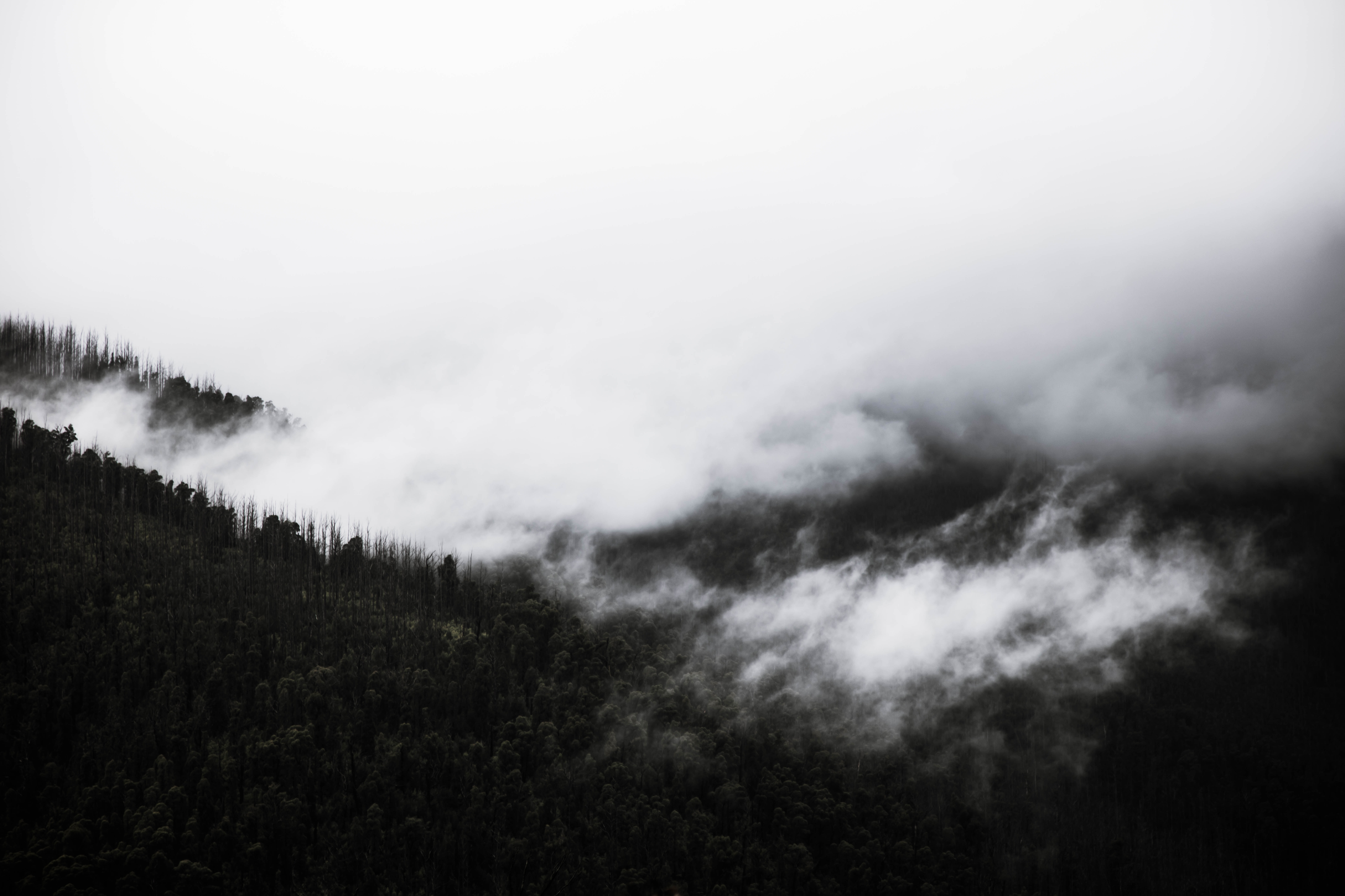 Forest and mountains of Lake Mountain covered in clouds