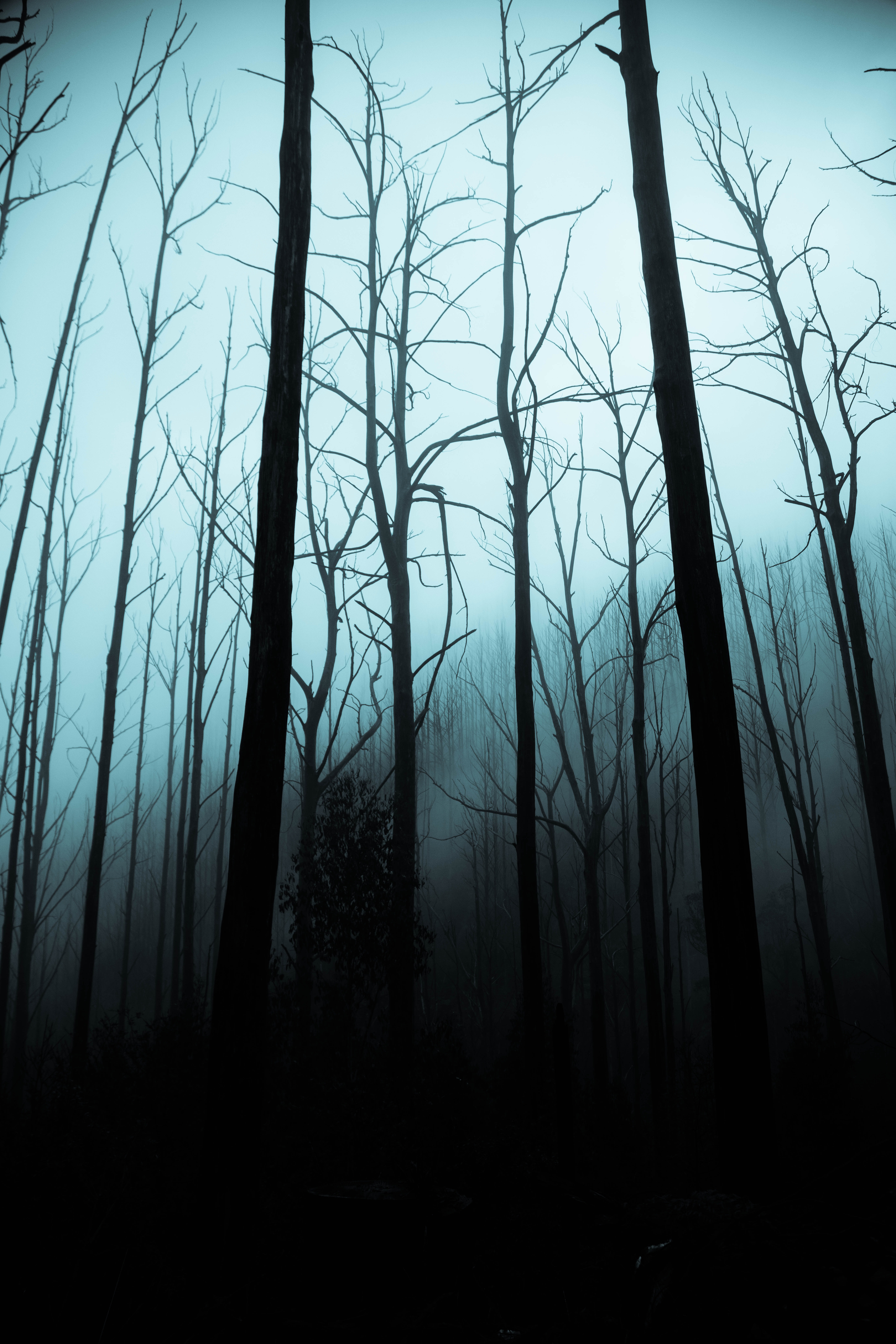 leafless trees on forest during dark sky