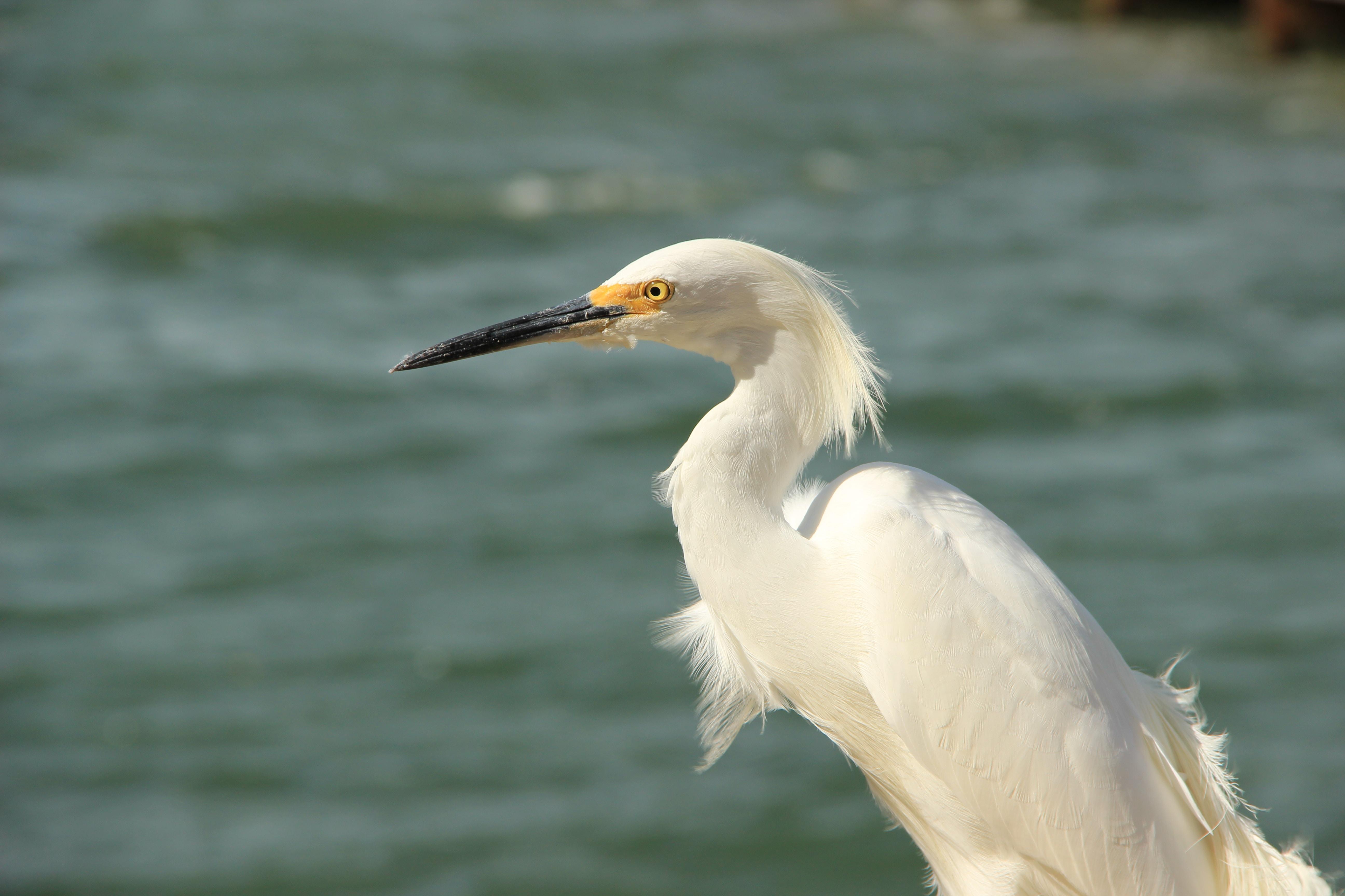 macro shot photography of white bird near body of water during daytime
