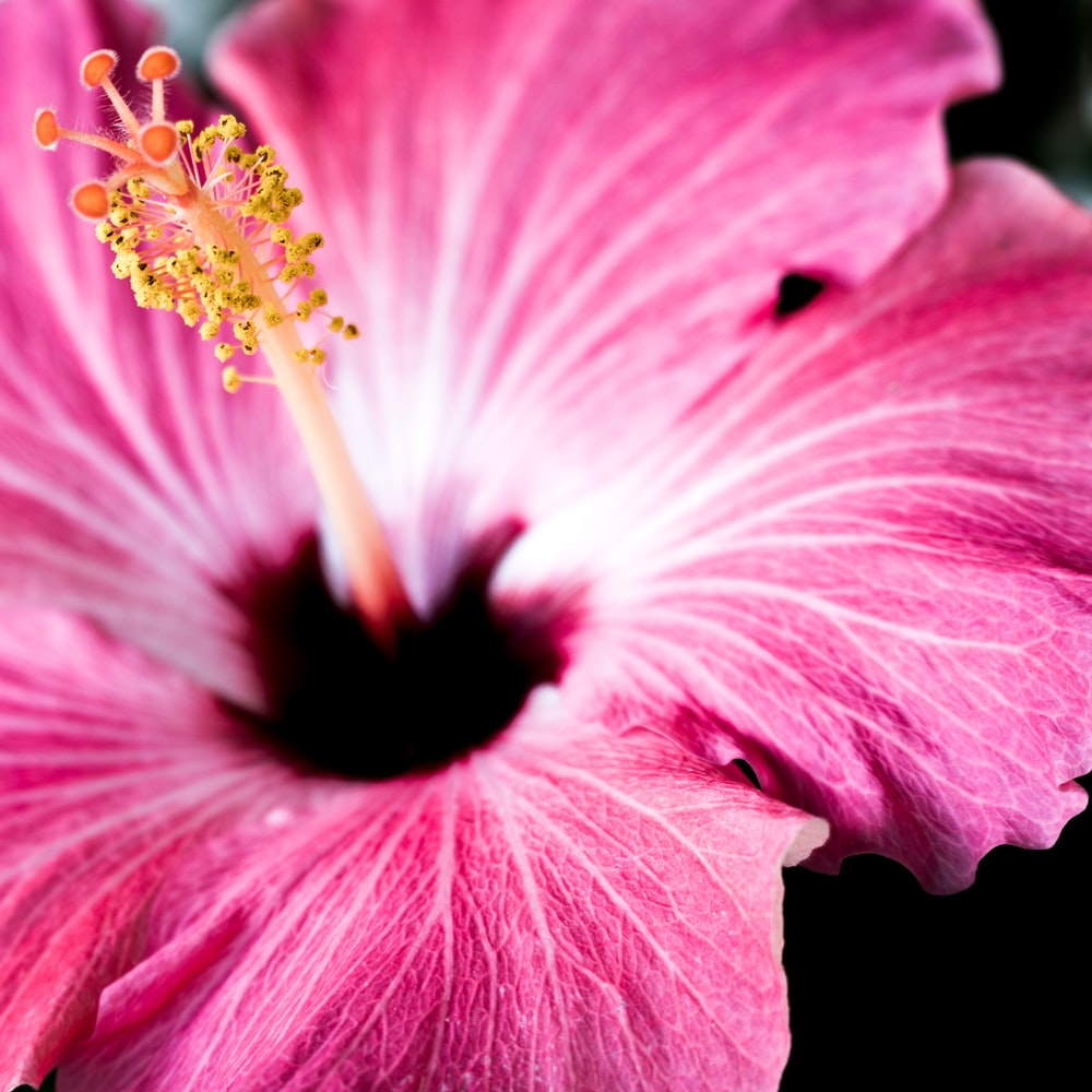 macro shot photography of pink petaled flowr