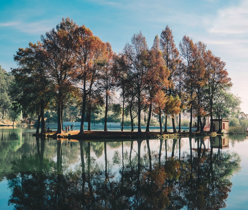 trees surrounded by body of water