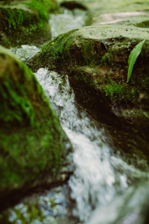 water flower through rocks