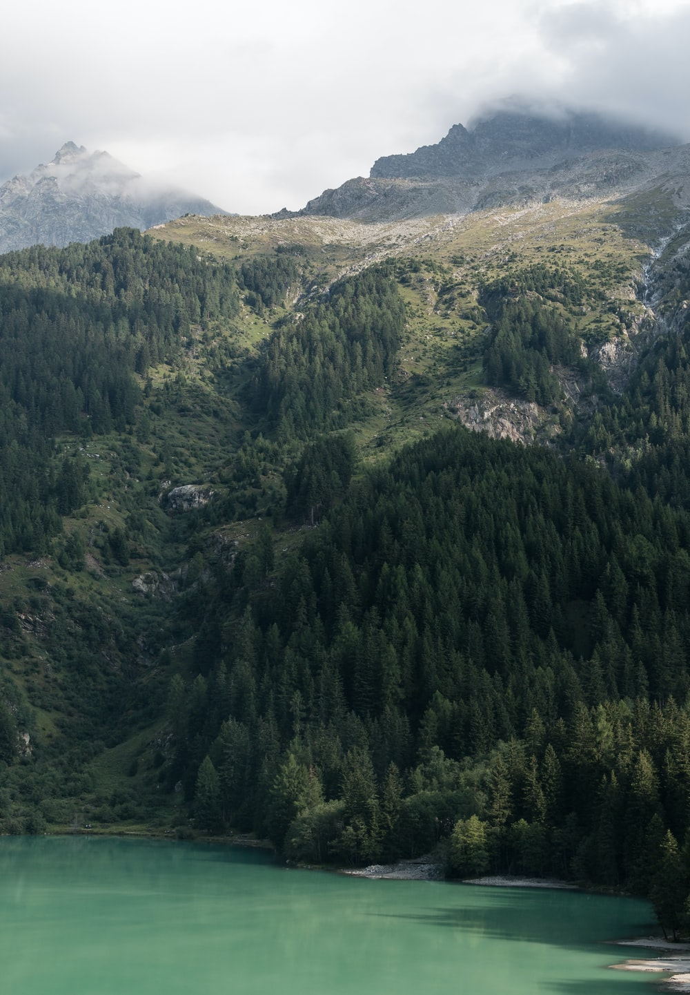 green trees and mountains near green body of water
