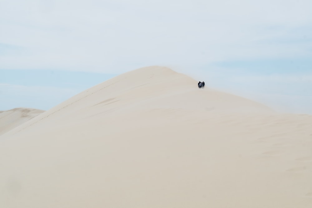 people standing on desert