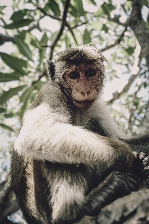 gray monkey on tree trunk
