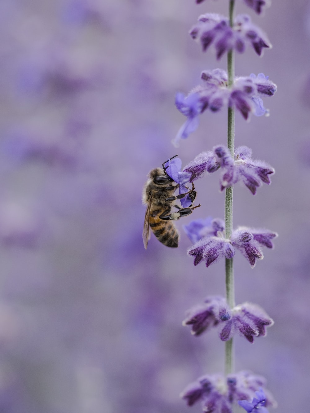 bee on purple flowe