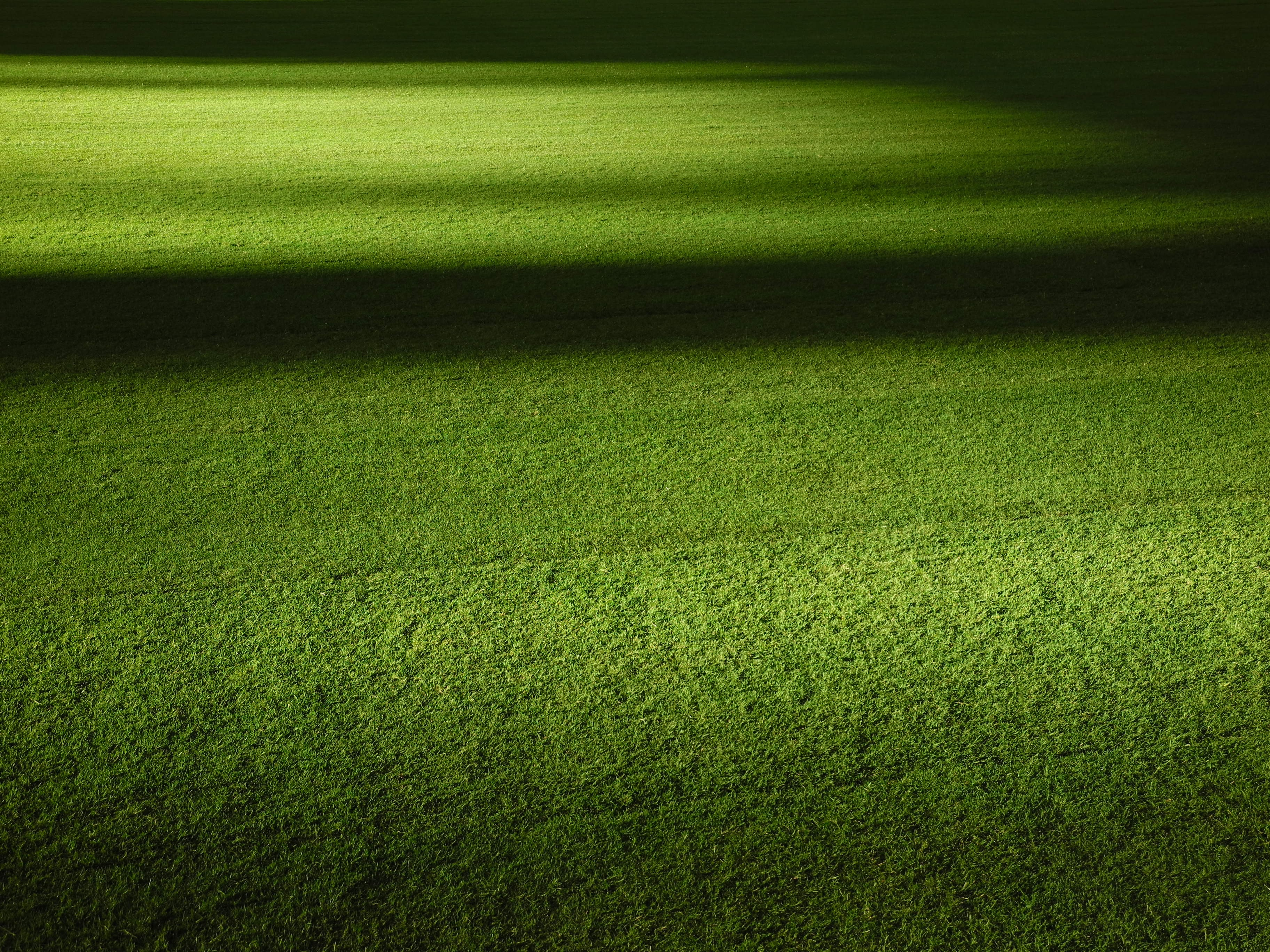 green grass field at nightime