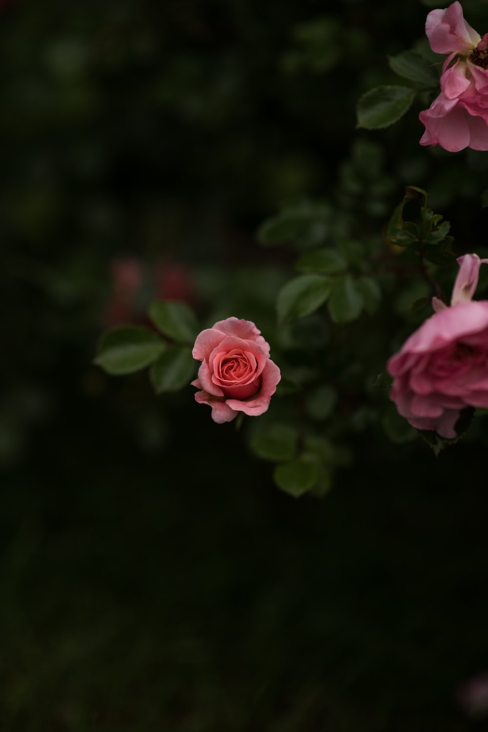 Flower Iphone Pictures Download Free Images On Unsplash