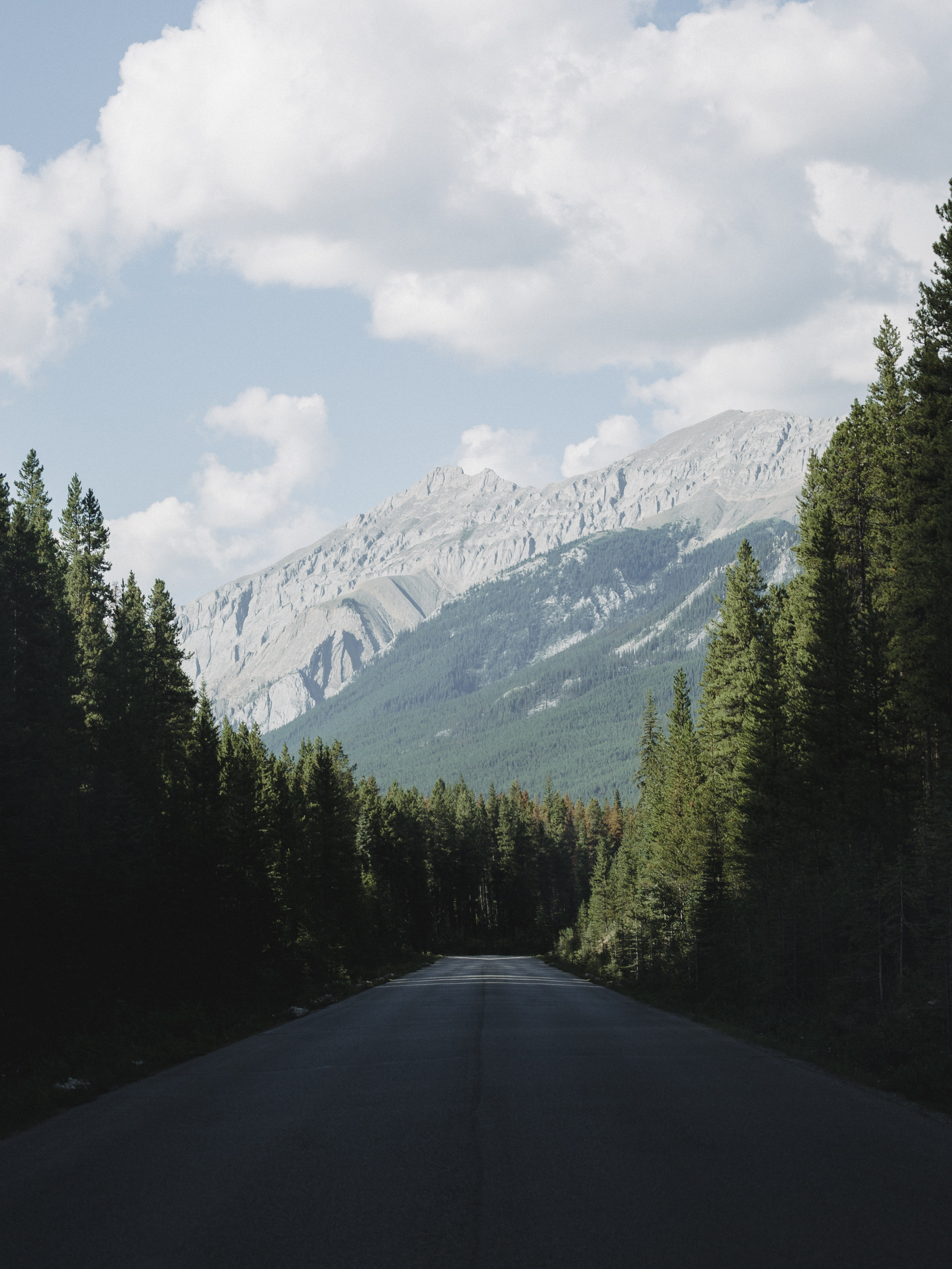 empty road between forest with mountain view
