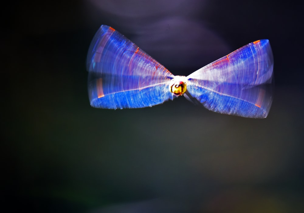 purple and yellow dragonfly in time-lapse photography