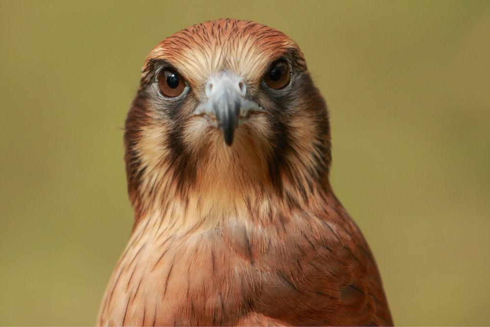 closeup photo of brown bird