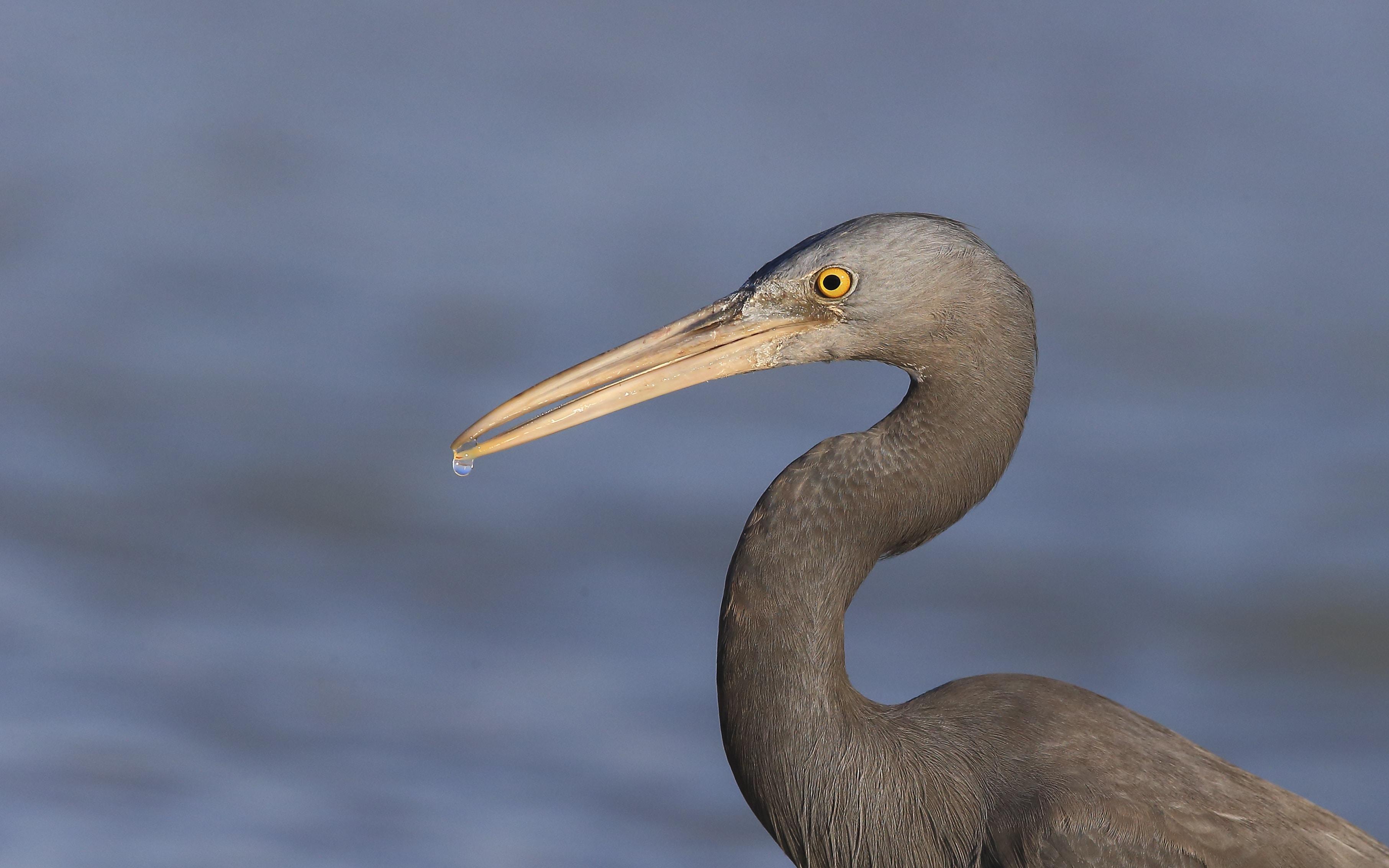 gray stork at daytime