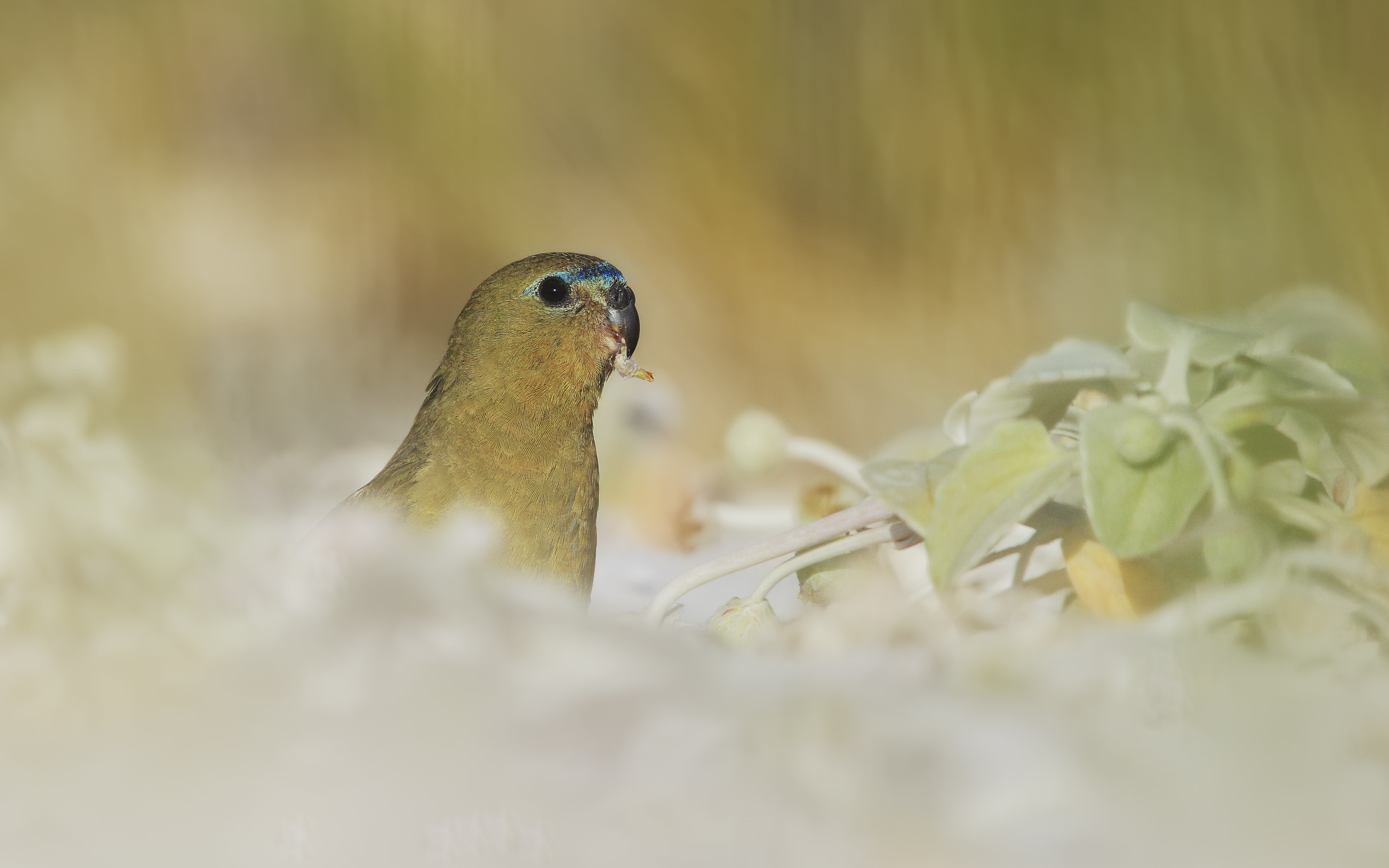 Macro of a light green bird with a bright blue streak on its forehead by some plants
