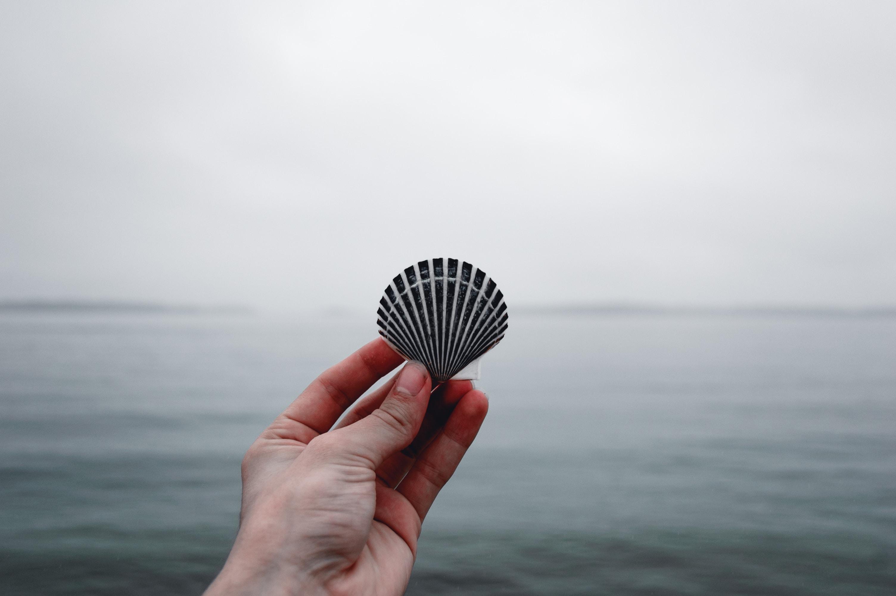 person holding black seashell