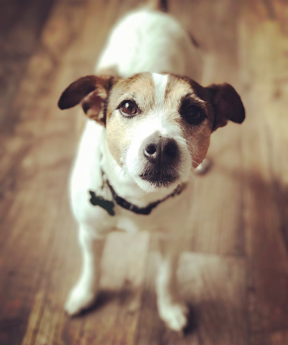 white and brown dog in shallow focus lens