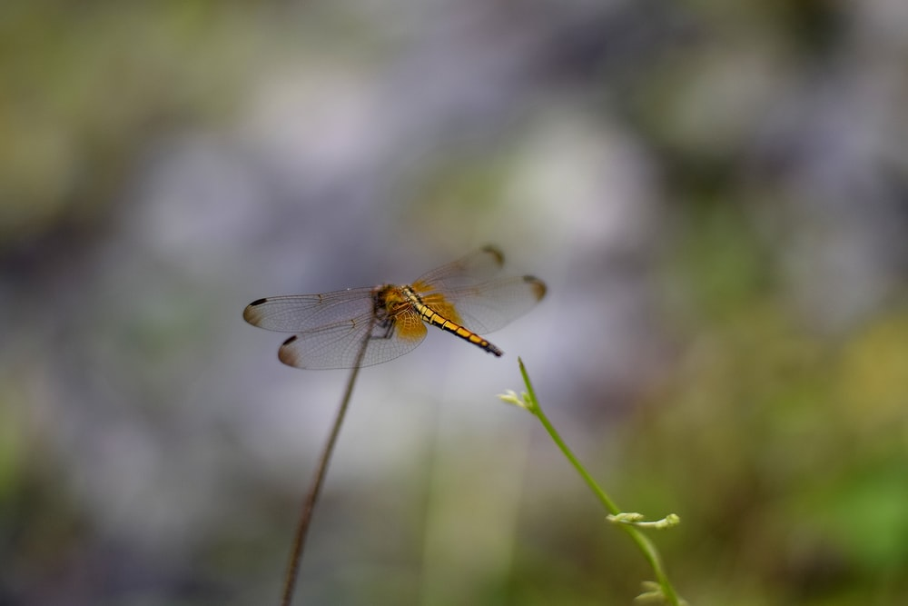 selective focus photography of orange dragonfly on plant