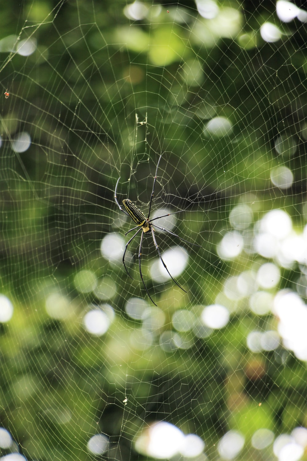 spider at web in forest