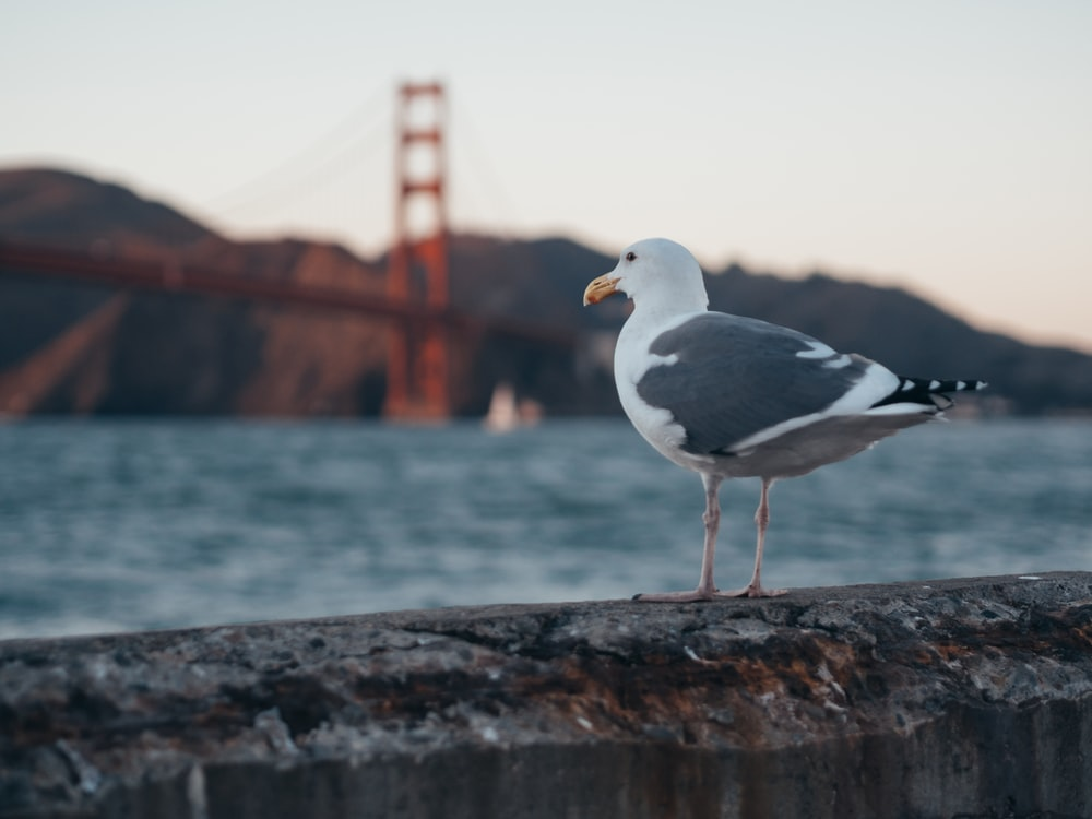 selective focus photography of seagull on gray rock