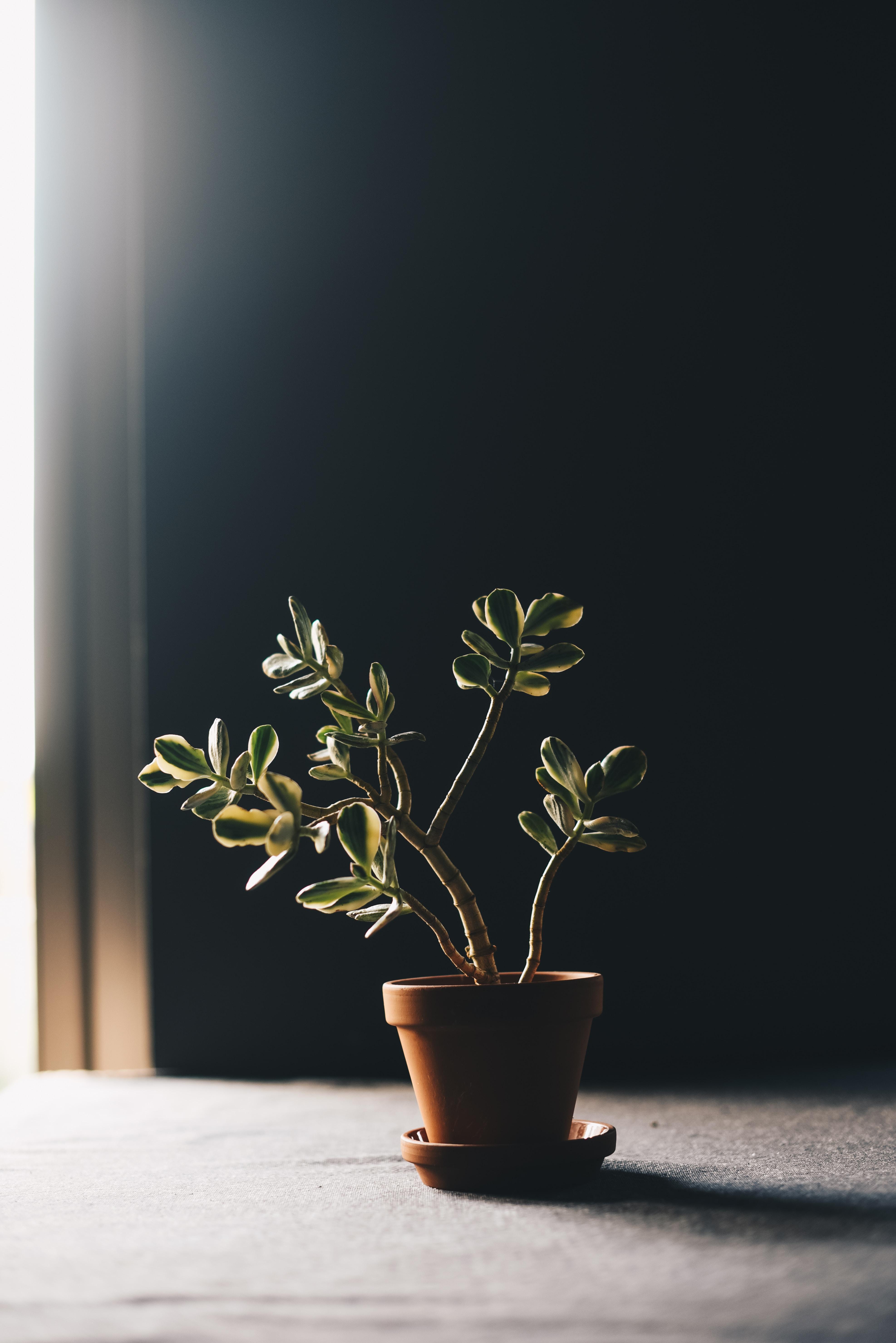 green indoor plant in clay pot
