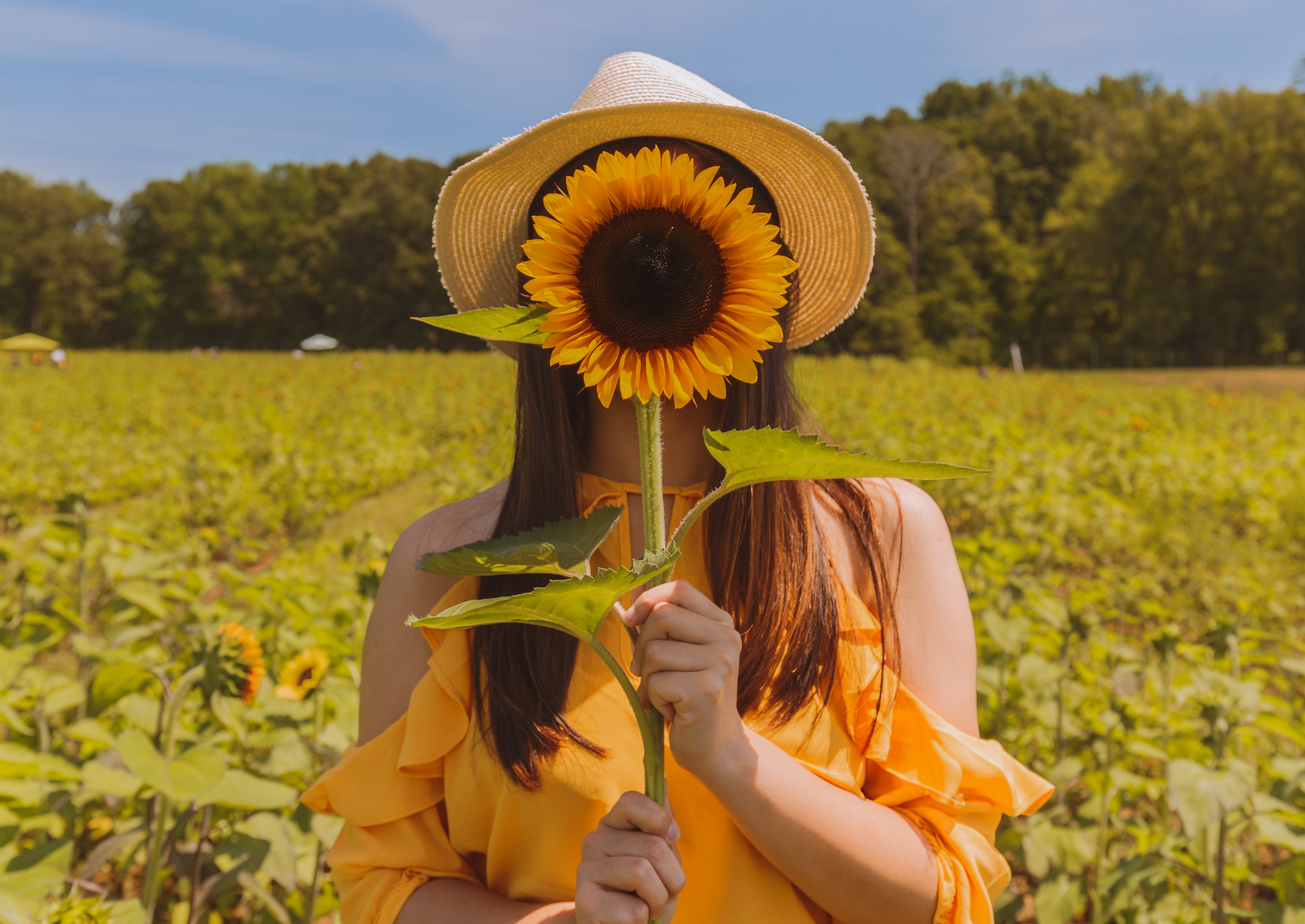 woman holding covering her face with sunflower at the field near trees during day