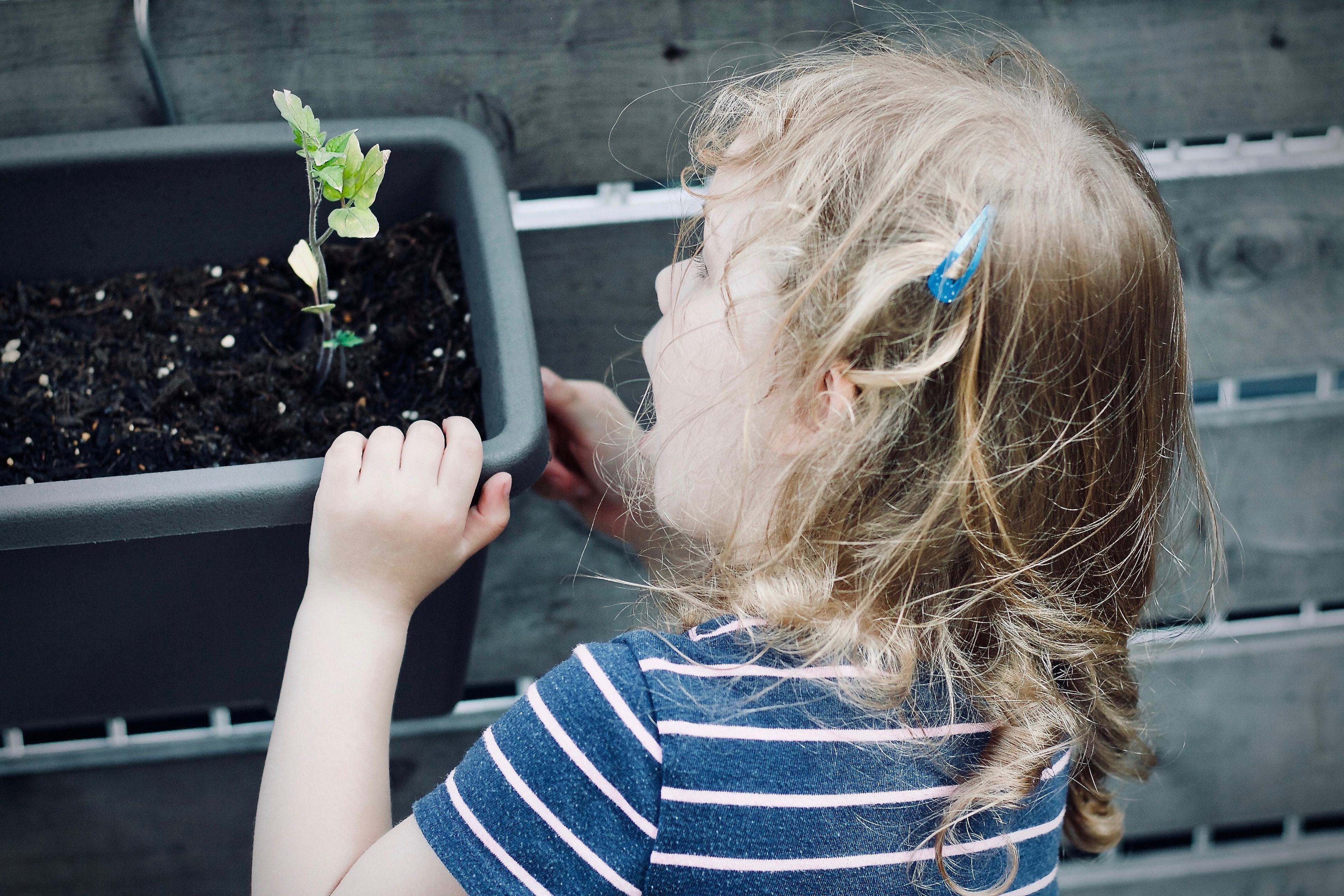 A young girl looks with excitement at a sprouting plant in a pot aside a fence