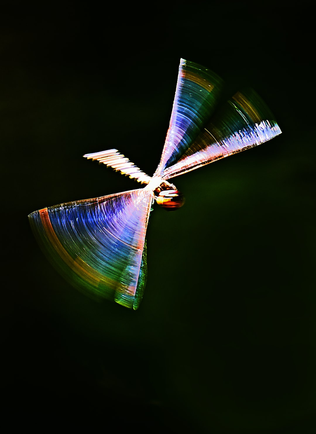 I like the angles and the blurring, as a dragonfly turns in mid flight.