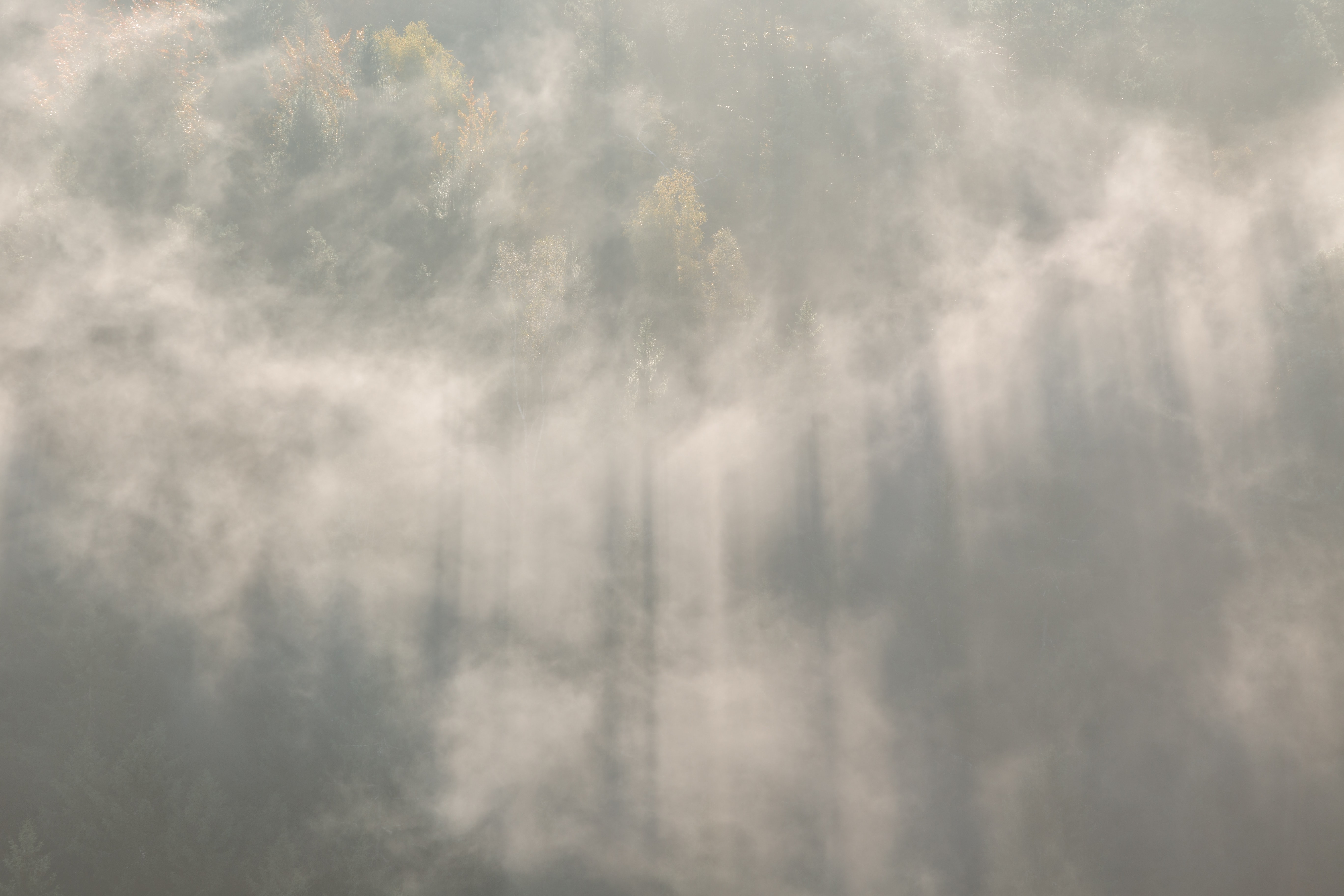 aerial photography of green trees under clouds and crepuscular rays