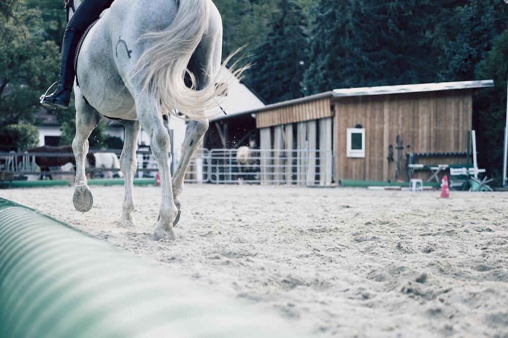 white horse standing on white sand