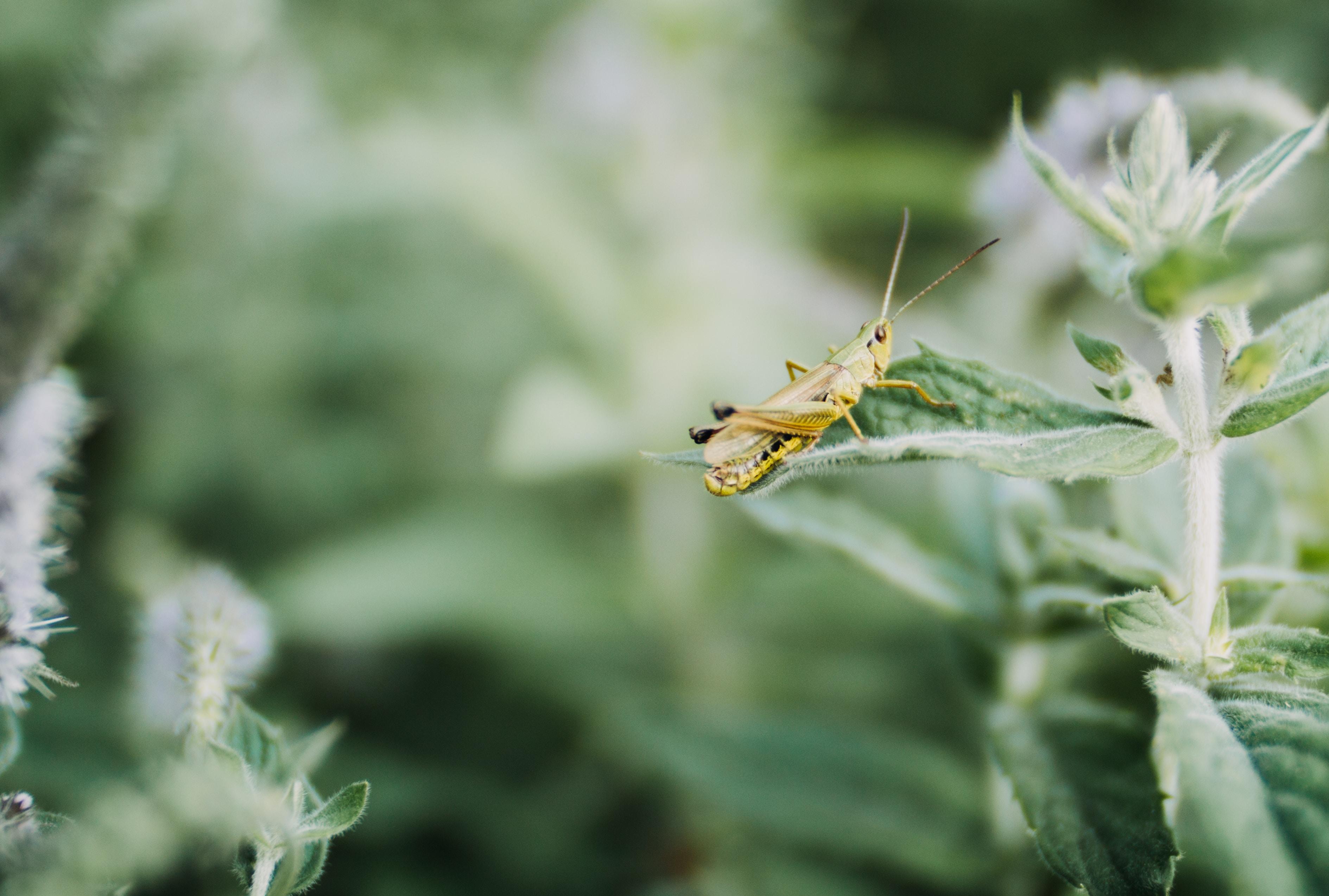yellow grasshopper on green plant