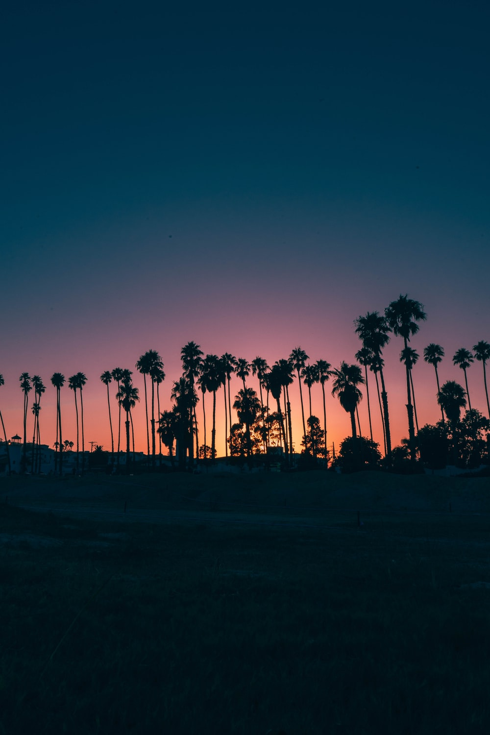 palm trees during sunset