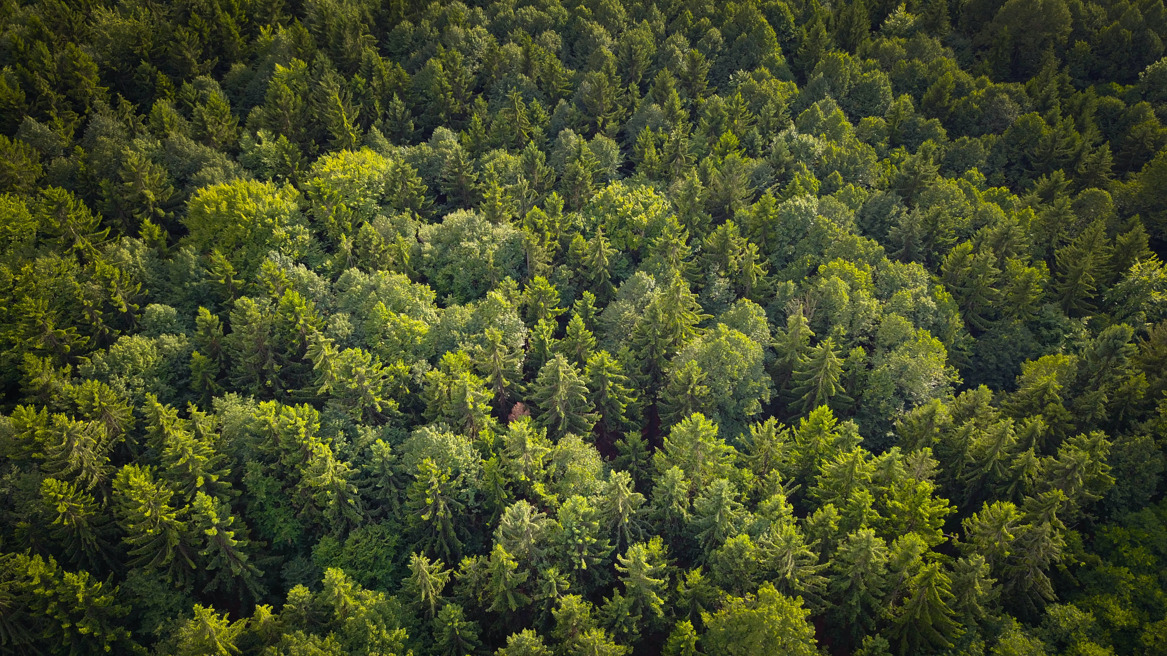 green trees top-view photography