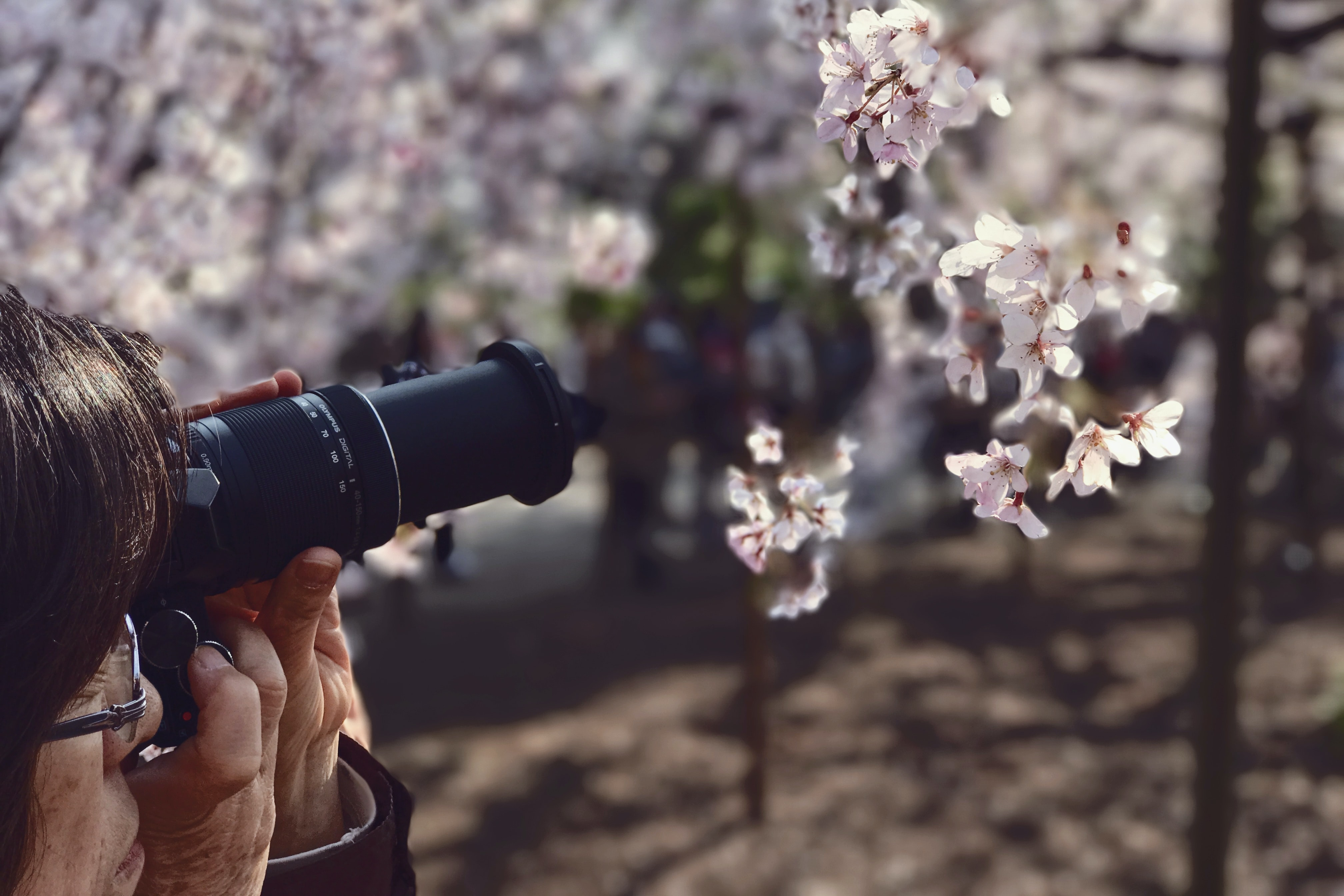 shallow focus photography of white flowers during daytime