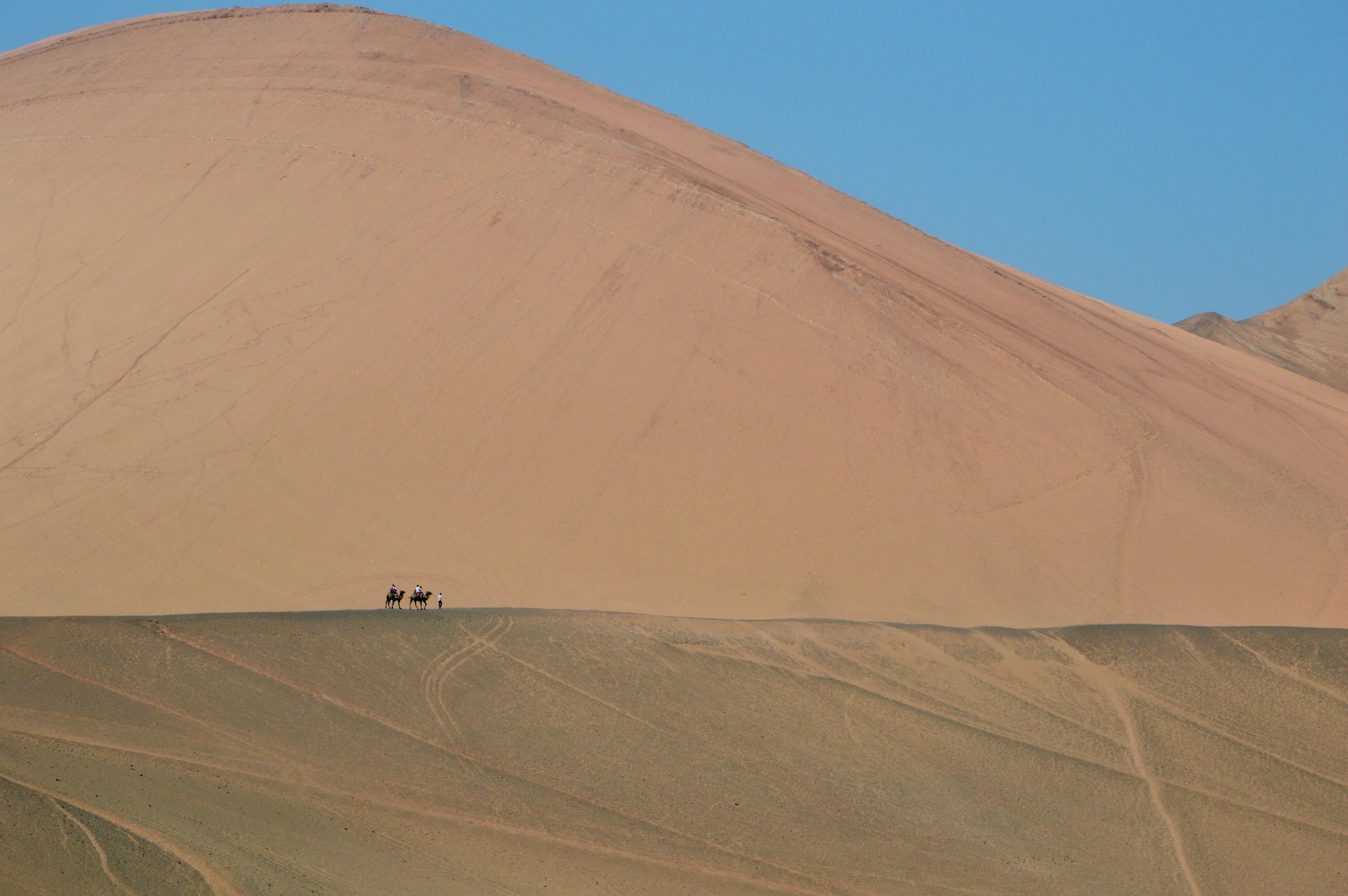 camel on desert during daytime