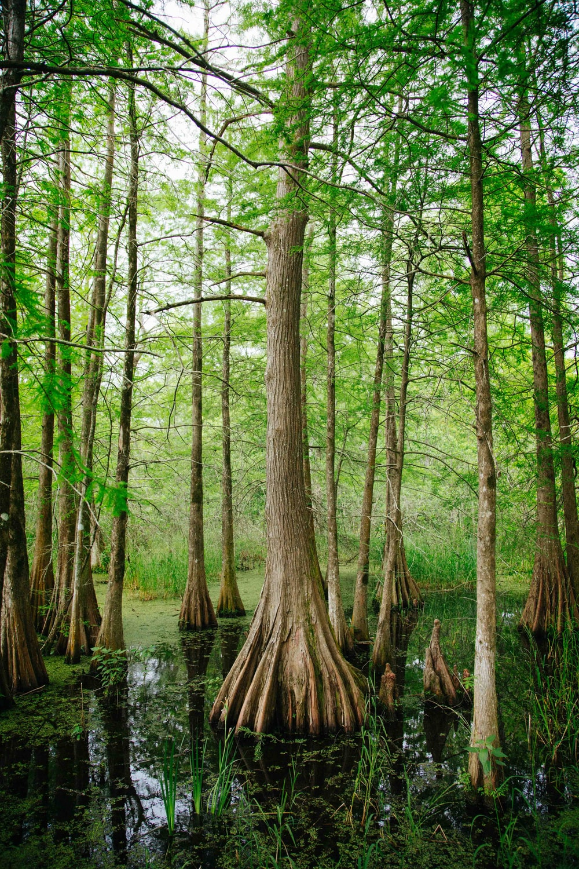 trees during daytime