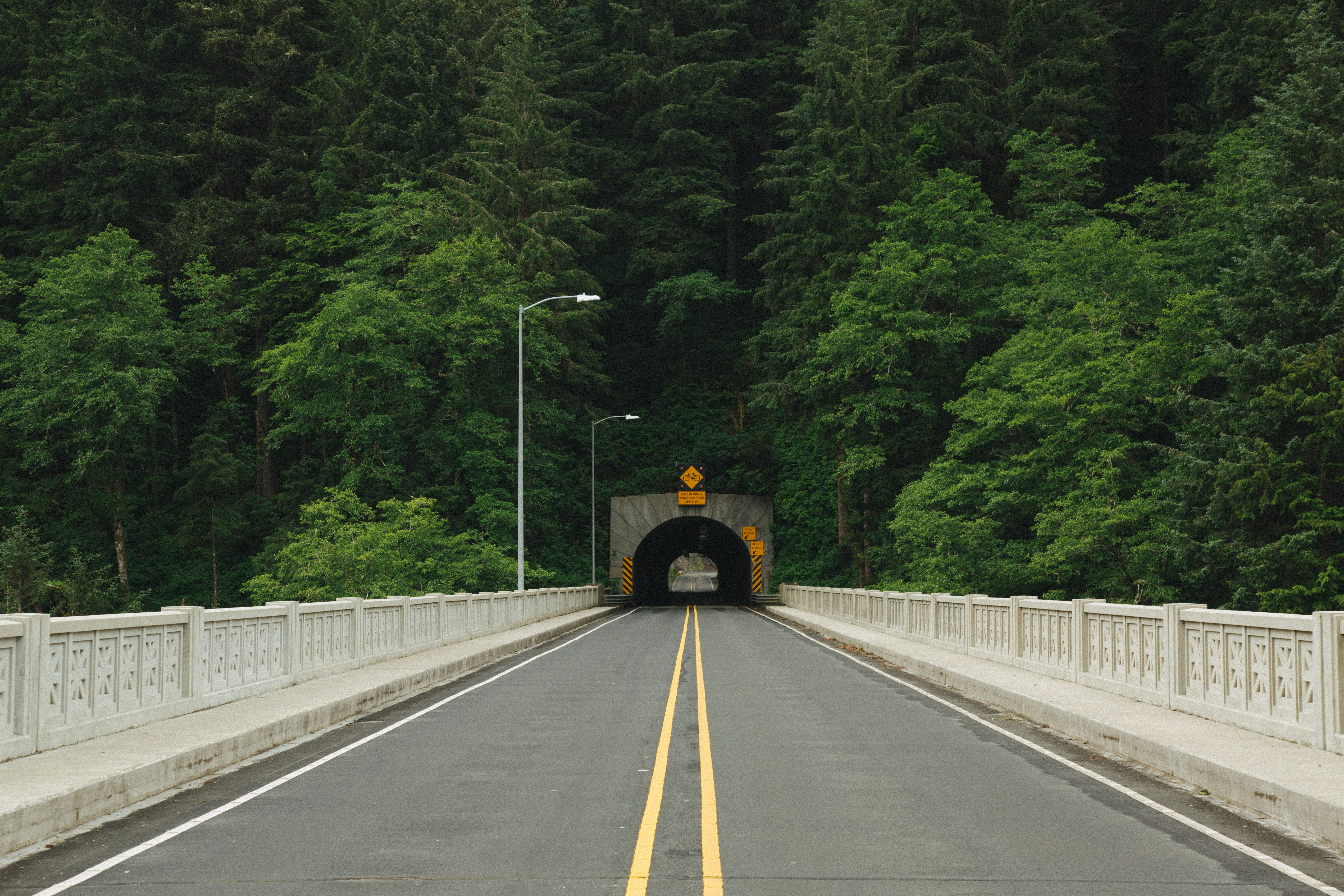 photo of road tunnel surrounded with trees