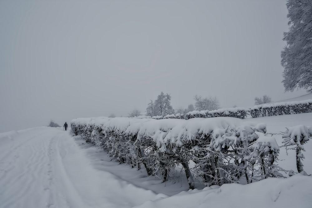 white snowfield