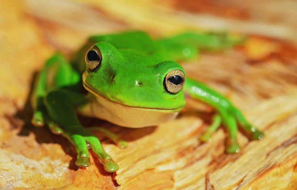 green frog on wood
