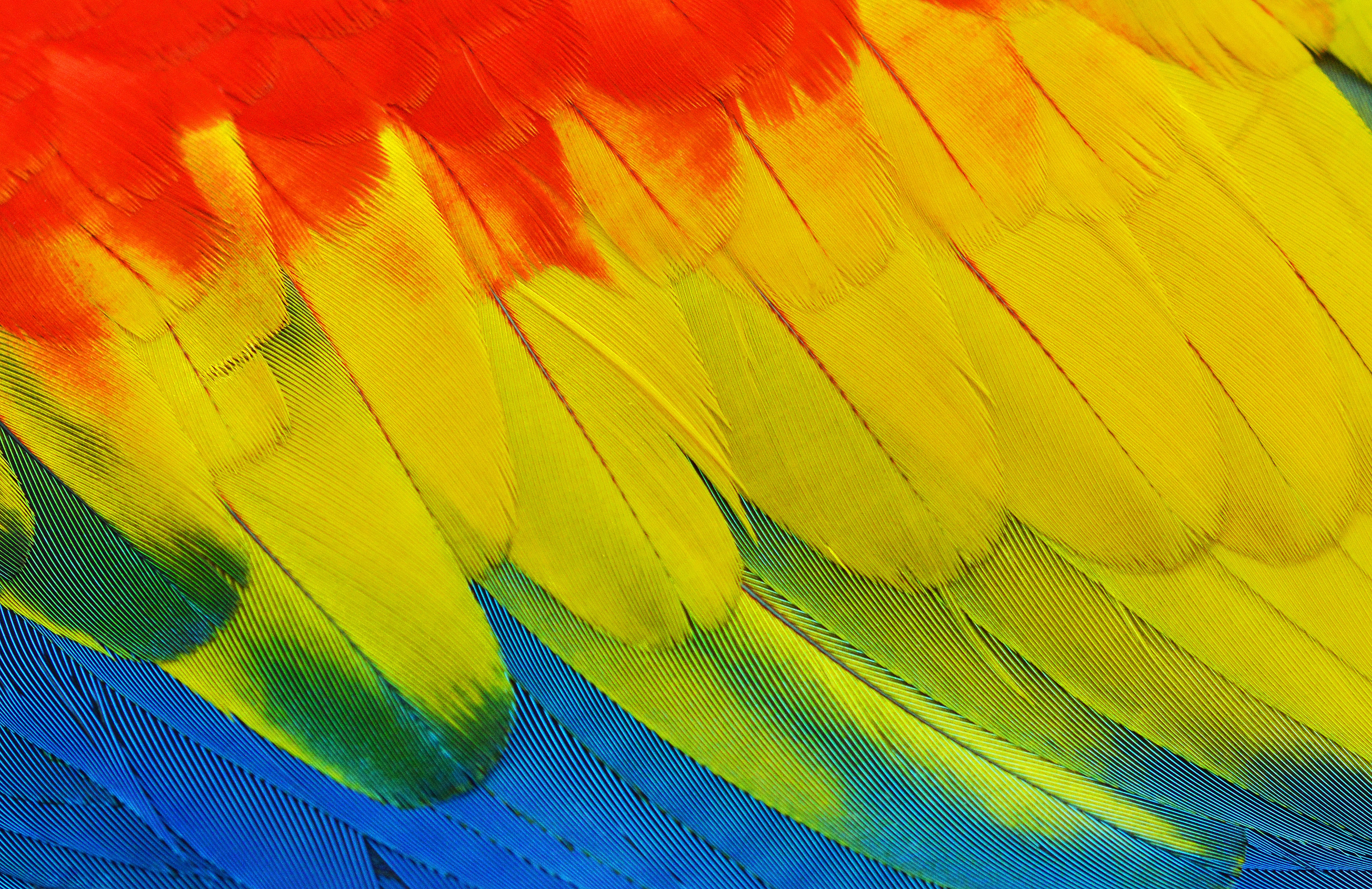 yellow, red, blue, and green feathers