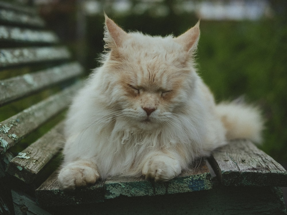 orange cat lying on brown wooden bench at daytime