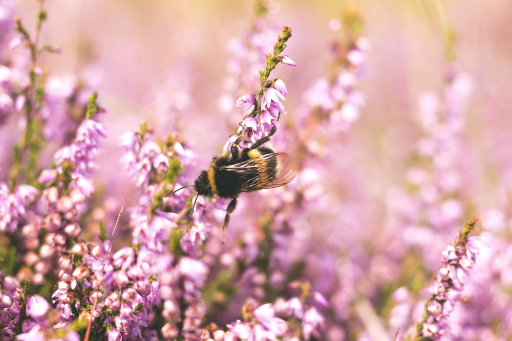shallow focus photography of bee on flower