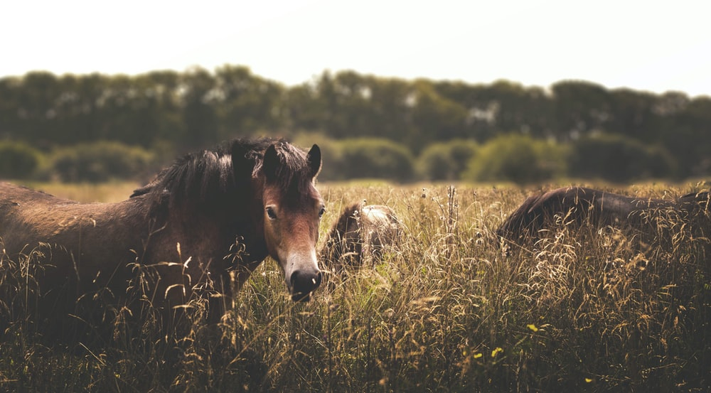 three brown horses surrounded by grass under white sky