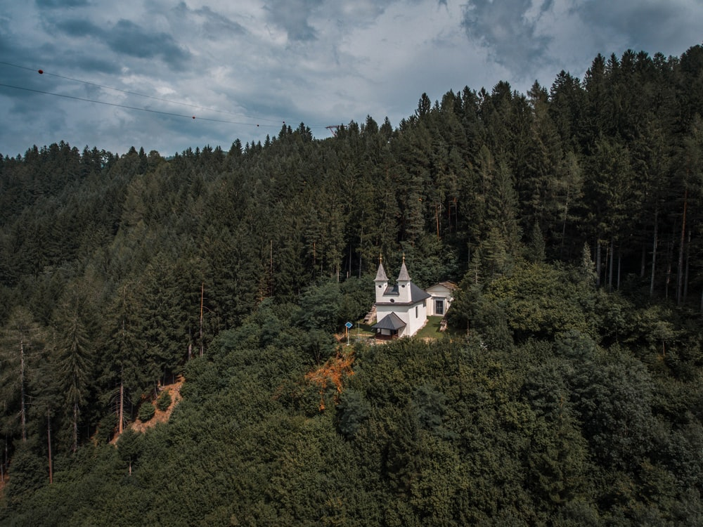 white house inside a forest
