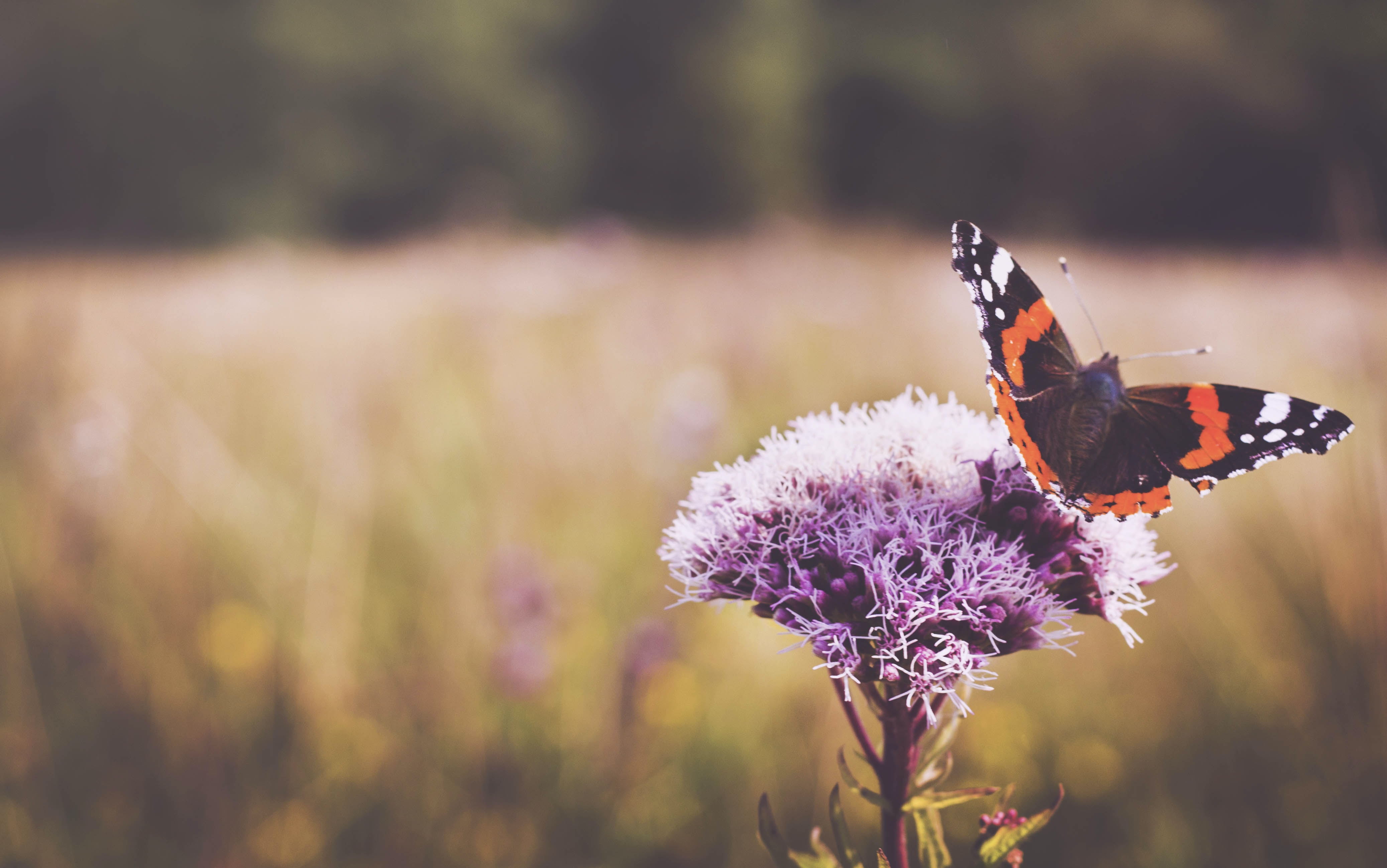 selective focus photography of black and red butterfly perched on purple flower