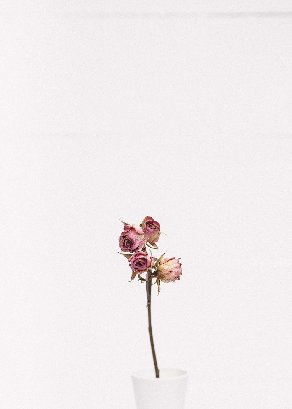 Charming Red Rose Photo By Ivan Jevtic Ivanjevtic On Unsplash